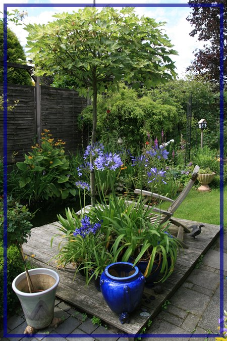 schmucklilie afrikanische lilie bl ten h ngen mein. Black Bedroom Furniture Sets. Home Design Ideas