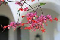 Exotische Blütenpracht rund ums Hotel