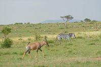 Zebras und Topis bis zum Horizont