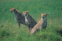 Kenya_2005_g101.jpg