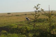 Kleine Vögel