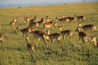 Kenya_2005_g141.jpg