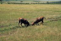 Kenya_2005_g153.jpg