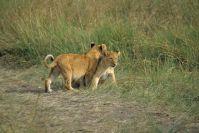 Kenya_2005_g071.jpg