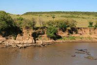 Der berühmte Mara River, mit Kuhreihern und ein paar Flusspferden