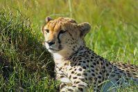Kenya_2005_g044.jpg