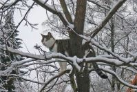 Fräulein Minnie's Gespür für Schnee