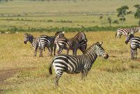 Kenya_2005_g047.jpg