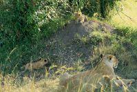 Kenya_2005_g100.jpg