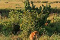 Anfangs sahen wir nur den Löwenmann