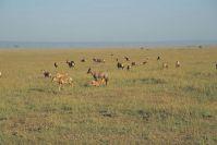 Kenya_2005_g120.jpg