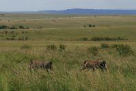 Warzenschweine, und die endlosen Hügel der Savanne