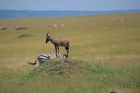 Kenya_2005_g081.jpg