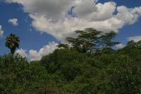 Das Camp ist eingezäunt, deshalb können keine Elefanten den alten Baumbestand zerstören