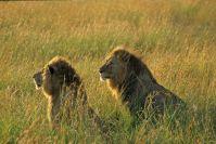 Kenya_2005_g095.jpg