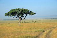 Kenya_2005_g150.jpg