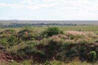 Auf diesem felsigen Hügel lagerte eine Gepardin mit ihren vier winzigen Jungen