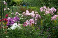 Blütenfülle im Hochsommer