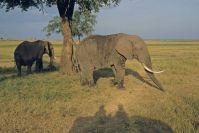 Kenya_2005_g039.jpg