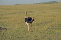 Kenya_2005_g121.jpg