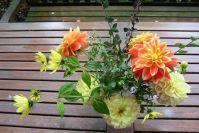 Die letzten Dahlien landen in der Vase