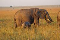 Kenya_2005_g123.jpg