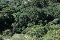 Coromandel Halbinsel