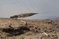 Im Mara-Fluss warten die riesigen Krokodile