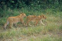 Kenya_2005_g069.jpg