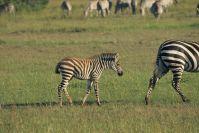 Kenya_2005_g145.jpg