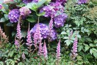 Dicke Blütenbälle im Kontrast zu fiedrigen Astilben