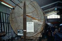 im Kauri-Museum