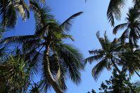 Palmen als Schattenspender