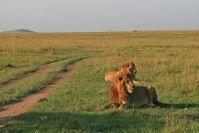 Und ein letztes Mal die Löwen