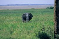 Kenya_2005_g104.jpg