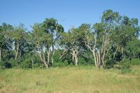 Kenya_2005_g154.jpg