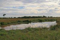 """Ein """"Spiegelteich"""" - Wasser gibt es immer irgendwo: Die Mara ist immergrün"""
