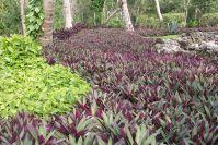 Der tropische Garten im Hotel