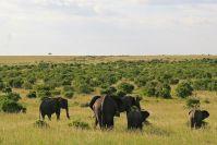 Eine Gruppe Elefanten