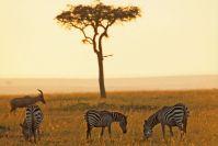 Kenya_2005_g122.jpg