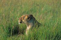 Kenya_2005_g067.jpg