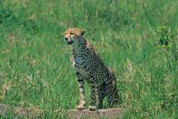 Kenya_2005_g103.jpg