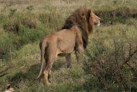 Löwen