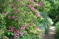 Der Vorgarten in voller Blüte